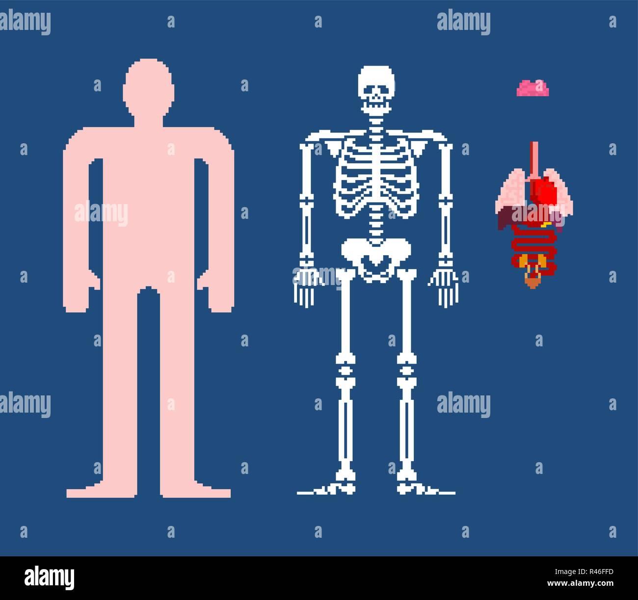 Human anatomy pixel art  8bit Internal organs and skeleton  Pixelate