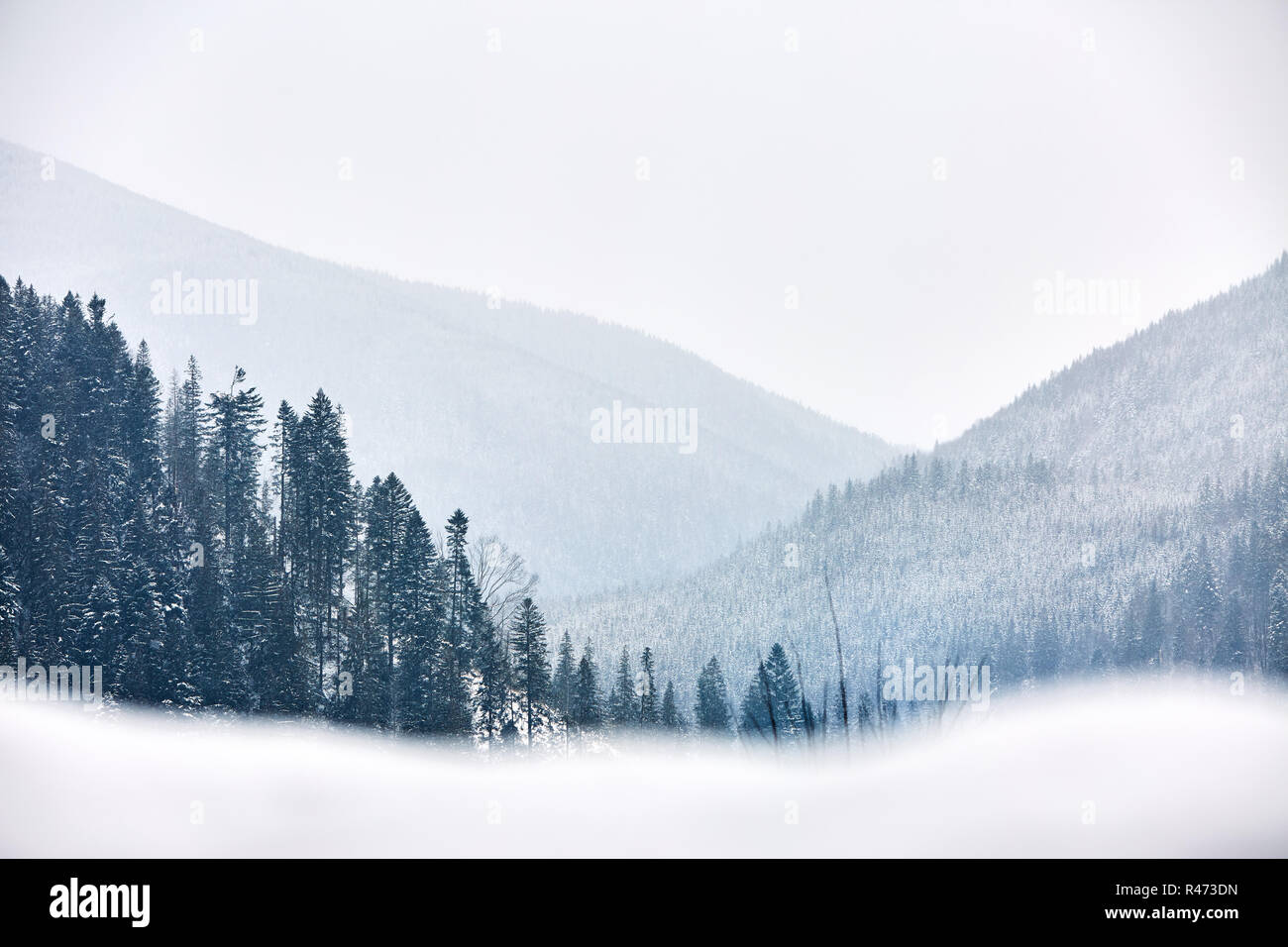 Multi layered mountain winter landscape. Slopes and evergreen woods covered with snow. Snowy pine and fir tree forest. Snowfall on a cold frosty day in the mountains gorge. Christmas background. - Stock Image