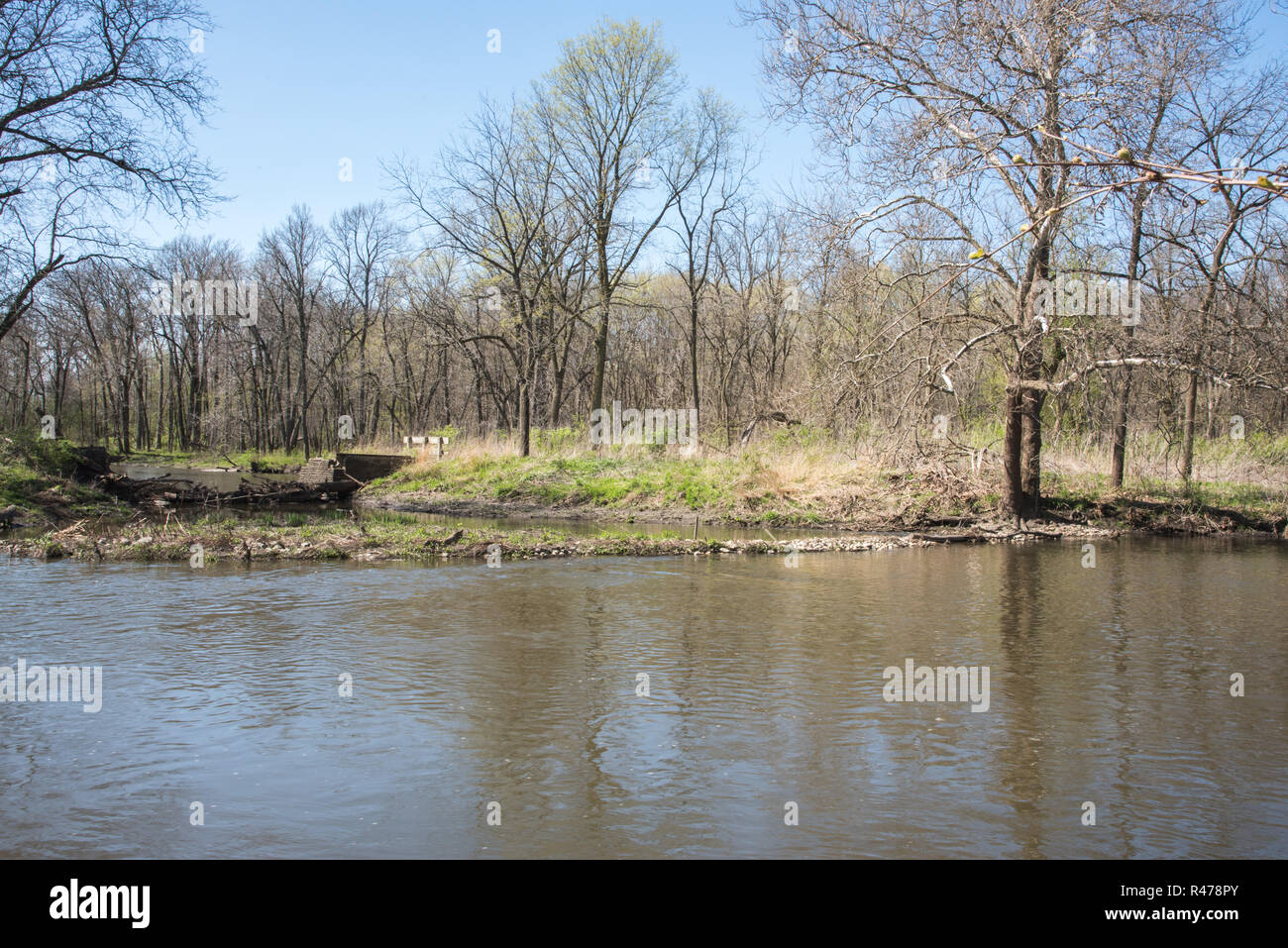 West Branch of the DuPage River with the native forest at McDowell Grove Preserve in Naperville, Illinois - Stock Image