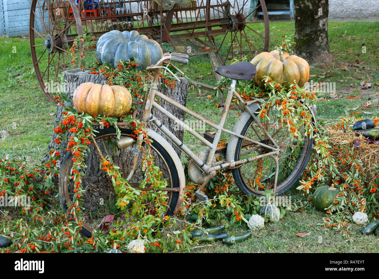 Old rusty bicycle decorated with flowers, pumpkins and other vegetables leant against a cut tree trunk in a garden - Stock Image