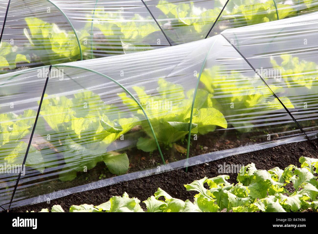 Plastic greenhouse for farming of vegetables - Stock Image