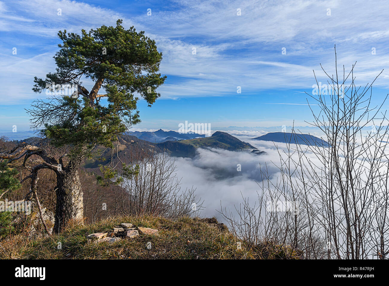 pine above the sea of u200bu200bclouds - Stock Image
