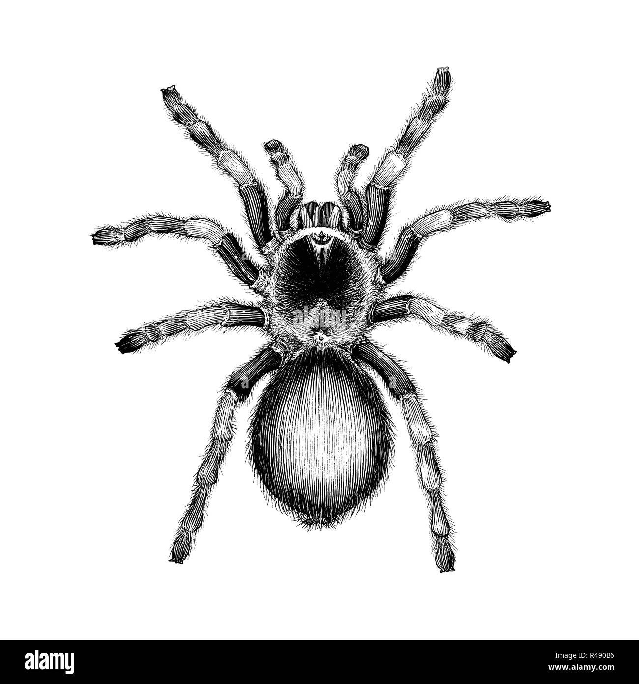 Spider Tattoo Stock Photos Spider Tattoo Stock Images Alamy
