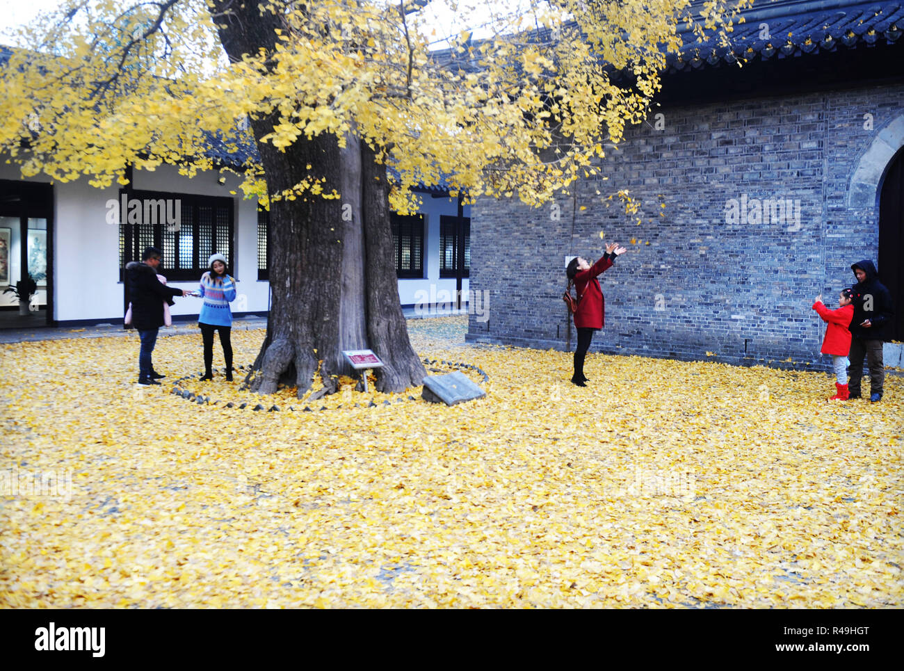 Yangzhou, China's Jiangsu Province. 25th Nov, 2018. Visitors enjoy a moment under a ginkgo tree at the Shangfang Temple in Yangzhou City, east China's Jiangsu Province, Nov. 25, 2018. Credit: Pu Liangping/Xinhua/Alamy Live News Stock Photo