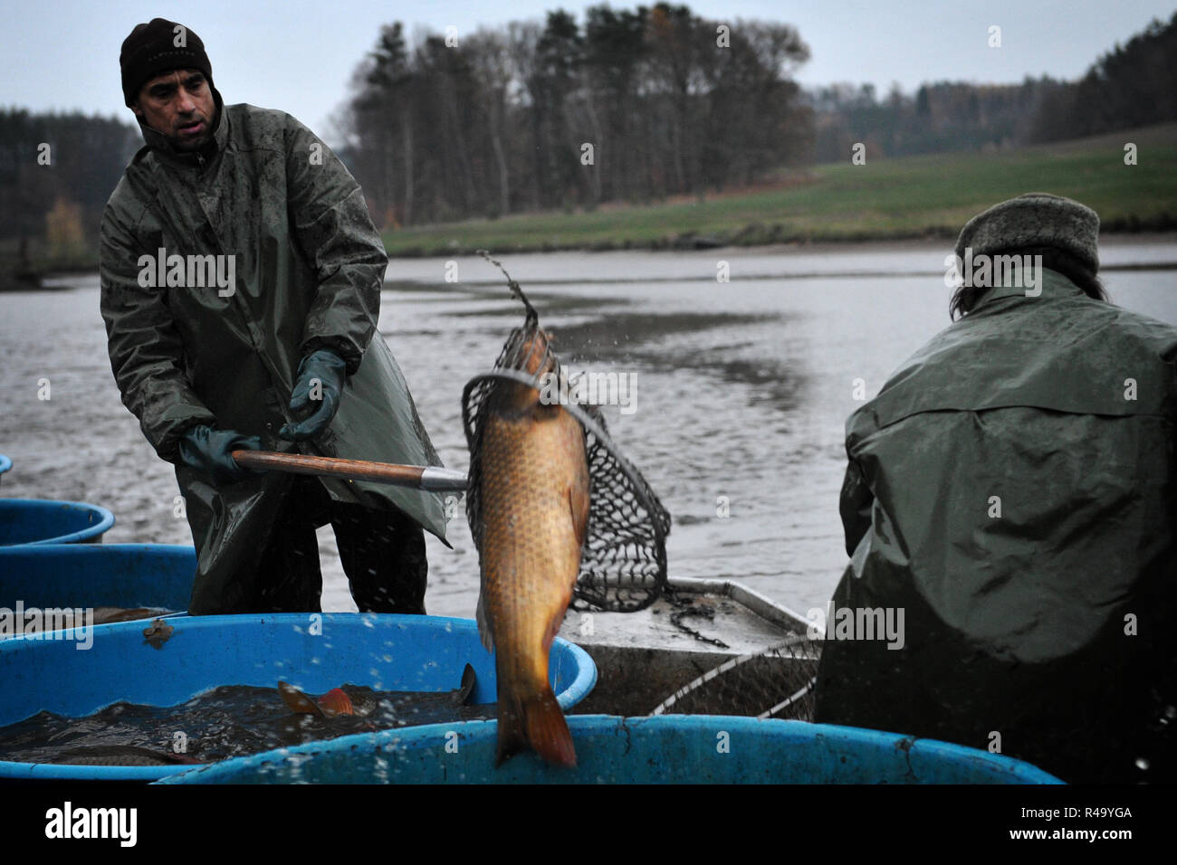 Suhrovice, Czech Republic  26th Nov, 2018  Czech fishermen