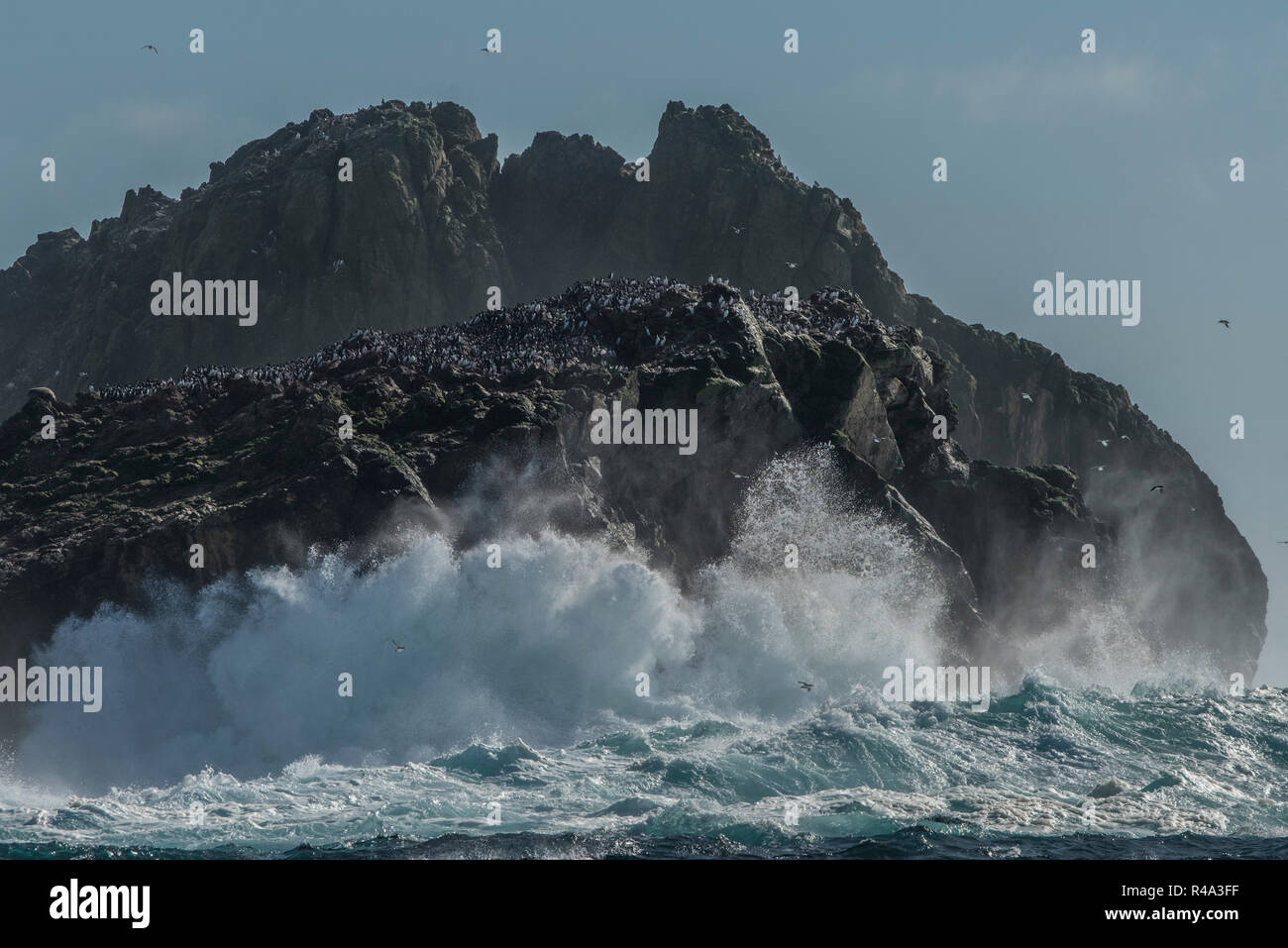 The waves crash against the shore of the Farallon islands off the coast of California, the islands are an important nesting site for pelagic birds. Stock Photo