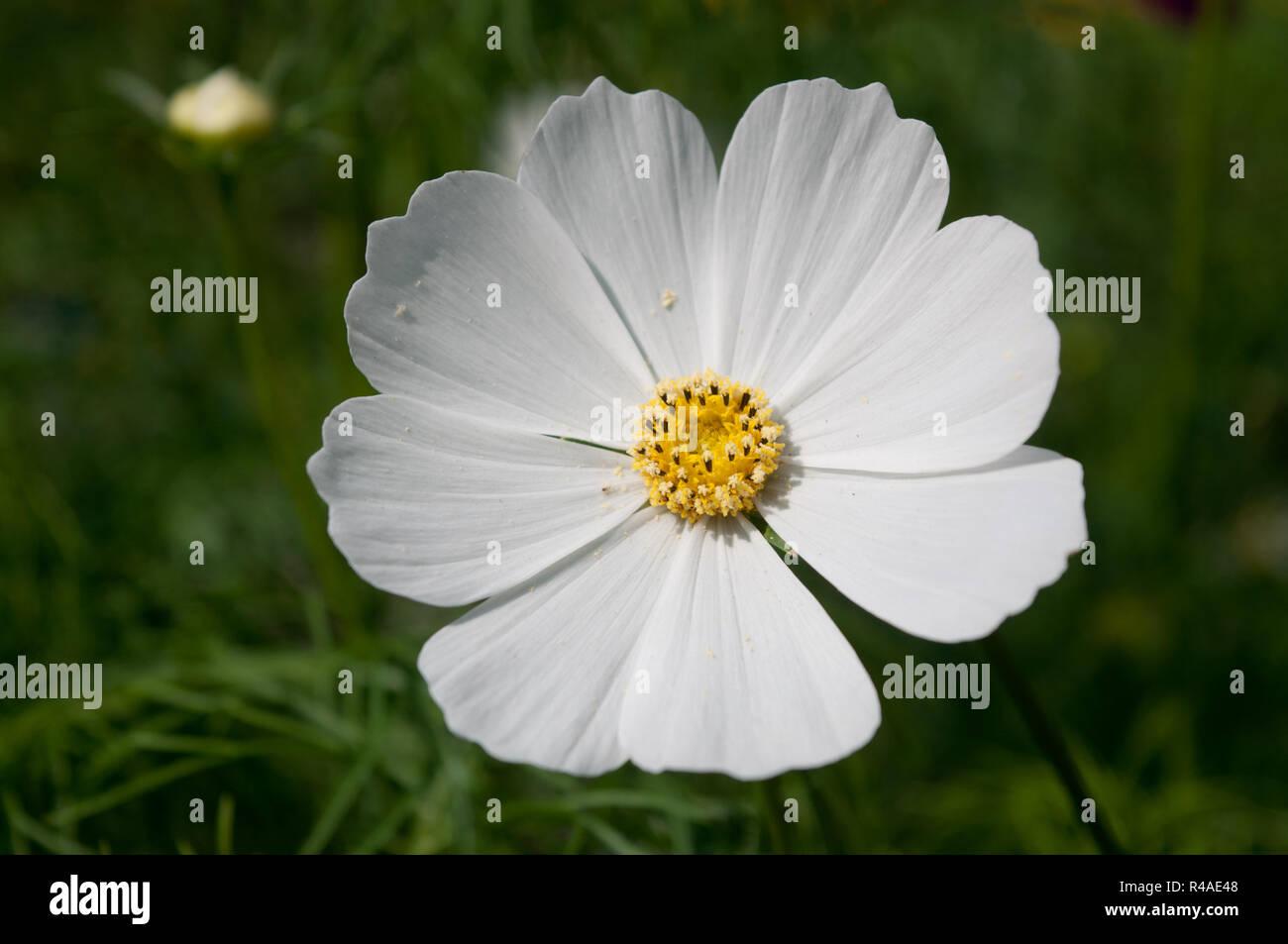 Good Morning Flower Stock Photo Alamy