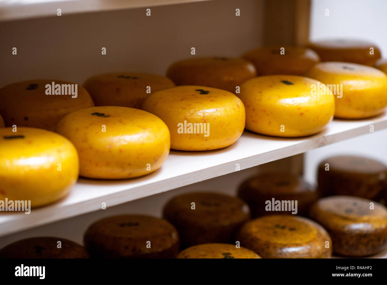 Cheese wheels on the shelf of the storage during the aging process - Stock Image