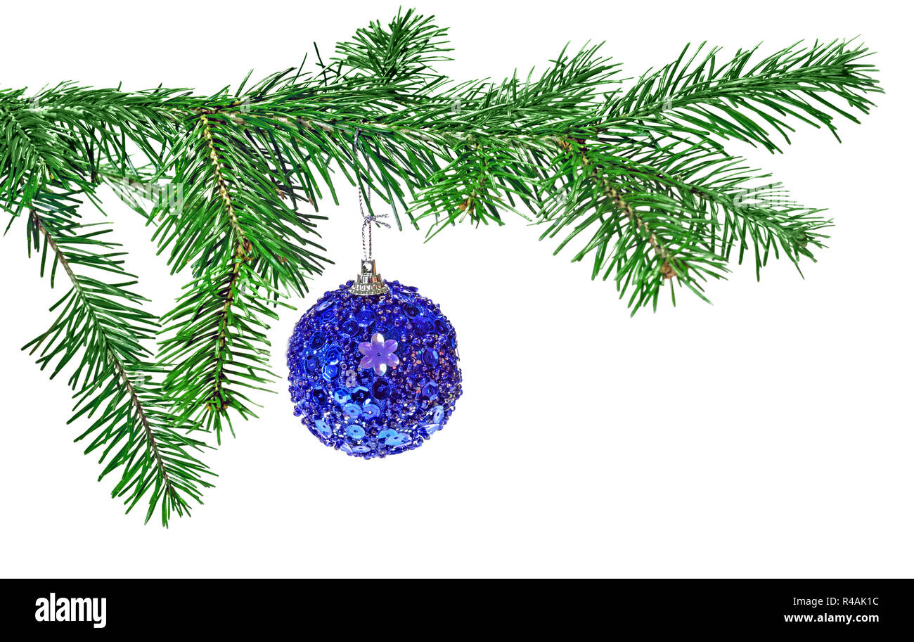 Blue Christmas ball decoration hanging on pine branch isolated over white background - Stock Image