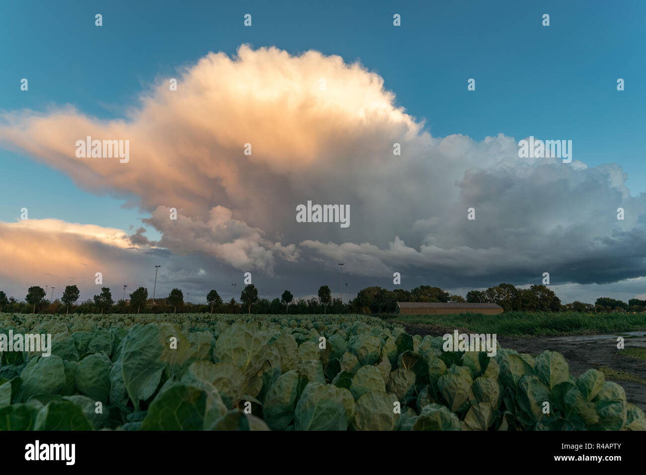 A thundery shower has a dramatic appearance against the blue sky as it is illuminated by the setting sun - Stock Image