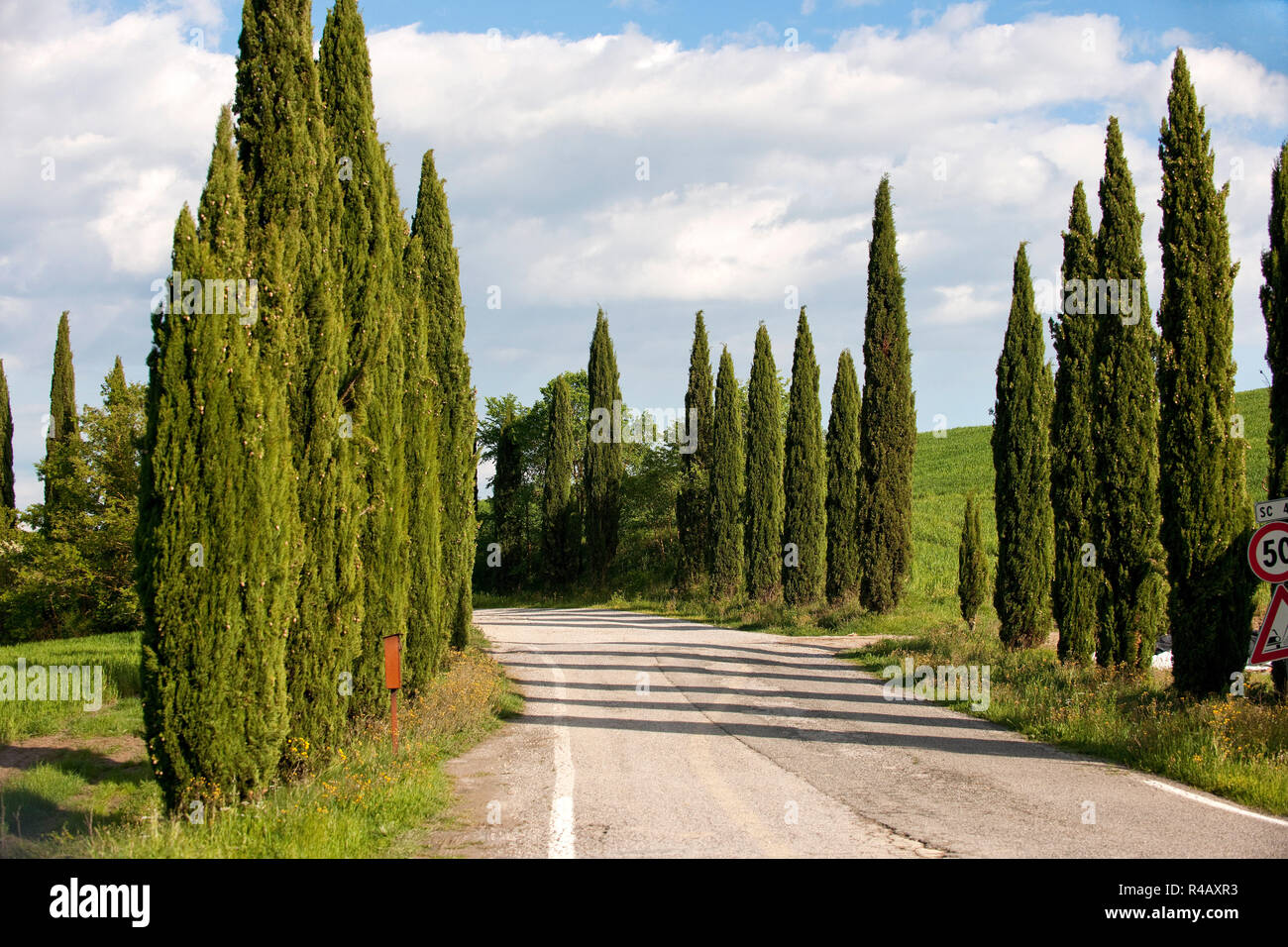 country road, cypresses, Tuscany, Italy, Europe, (Cupressus sempervirens) Stock Photo