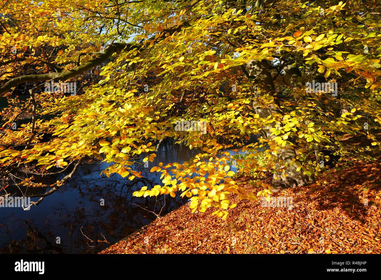 Discolored trees in thePark Wallanlagen in autumn, Bremen, Germany, Europe I Verfärbte Bäume in den Wallanlagen im Herbst , Bremen, Deutschland, Europ Stock Photo