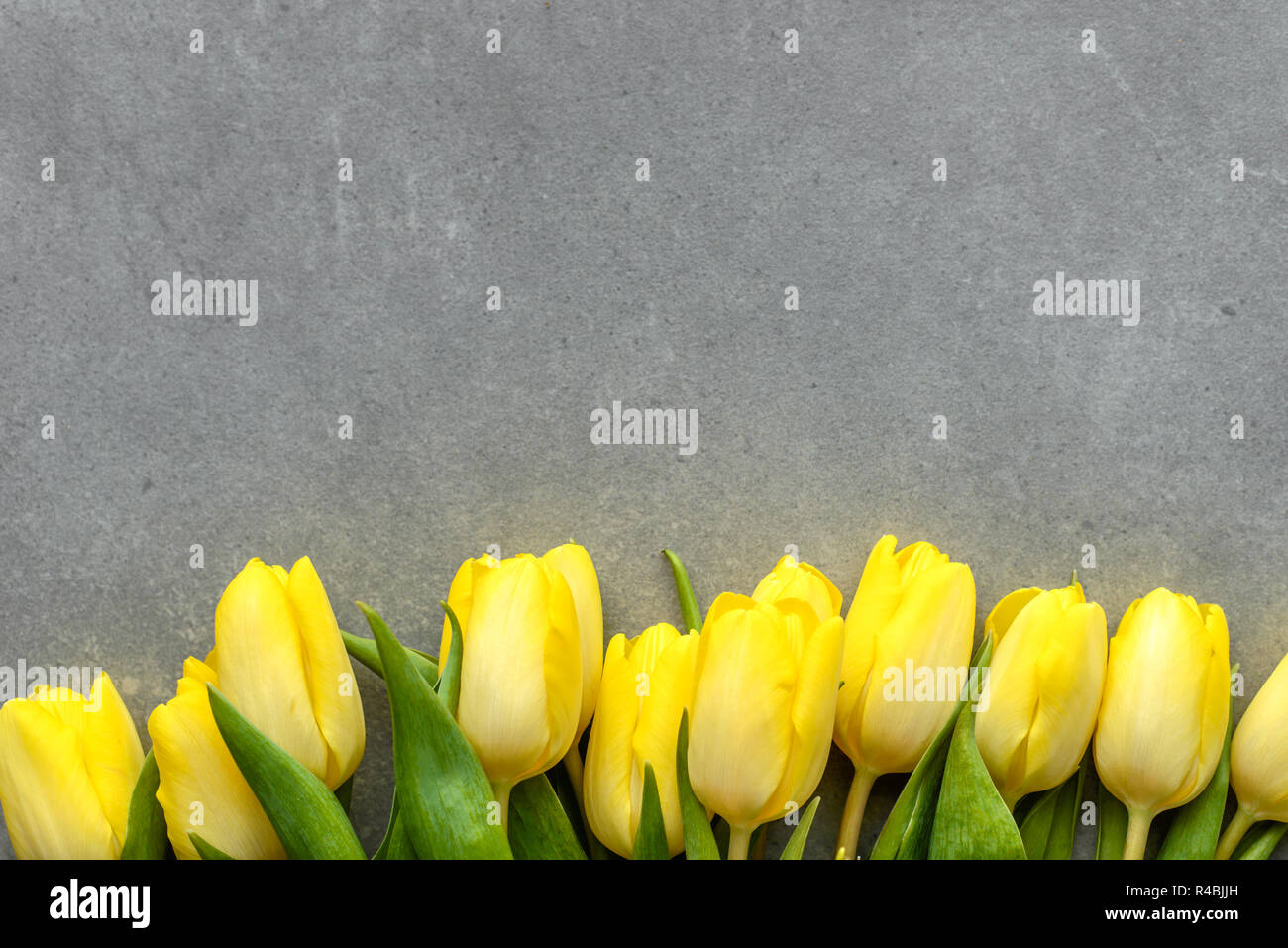 Spring Tulips Easter Flowers Womens Day Background Or Mothers Day