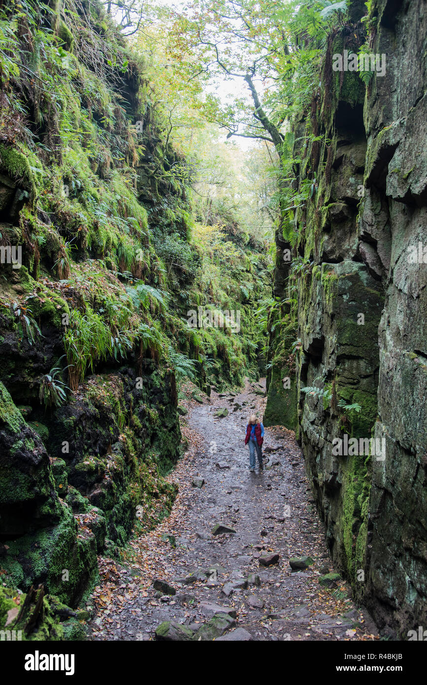 Lud`s  Church is a deep chasm situated in the roaches area of North Staffordshire peak district .England  UK - Stock Image