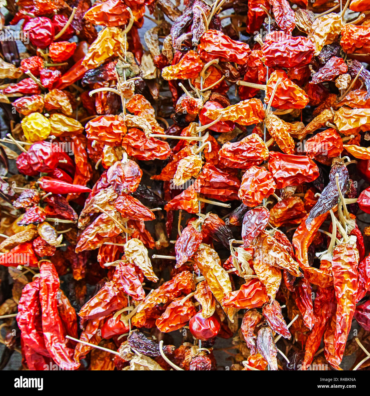 dried red chili on market - Stock Image