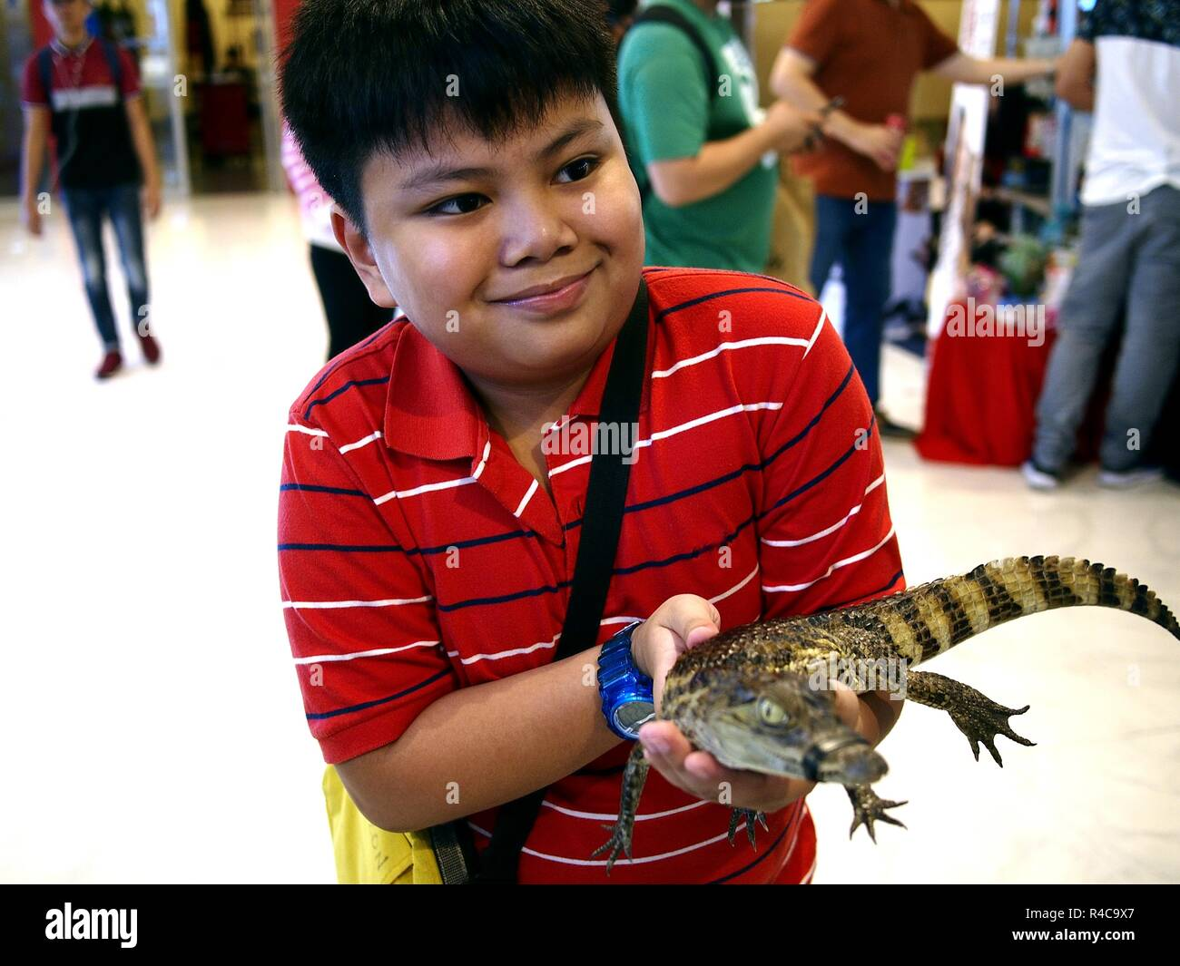 QUEZON CITY, PHILIPPINES - NOVEMBER 18, 2018: A young Asian boy holds a live young Caiman at a pet store. Stock Photo