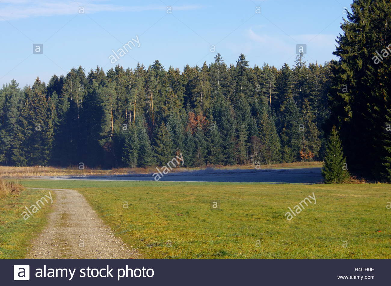 The natural habitat of meadows and trees - Stock Image