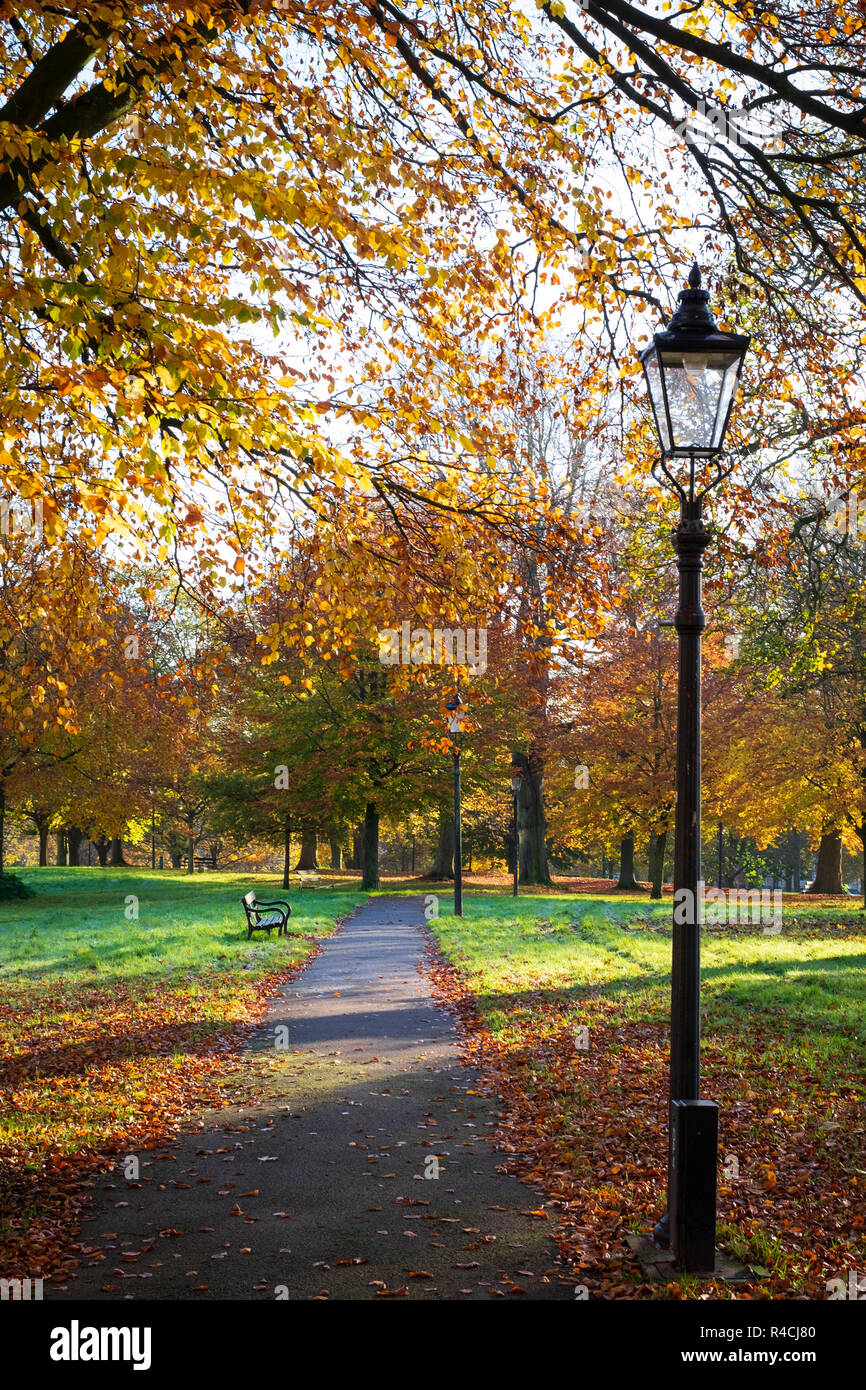 Autumnal leaves  and Victorian streetlamp on sunny day on Christchurch green, Clifton,  in Bristol - Stock Image