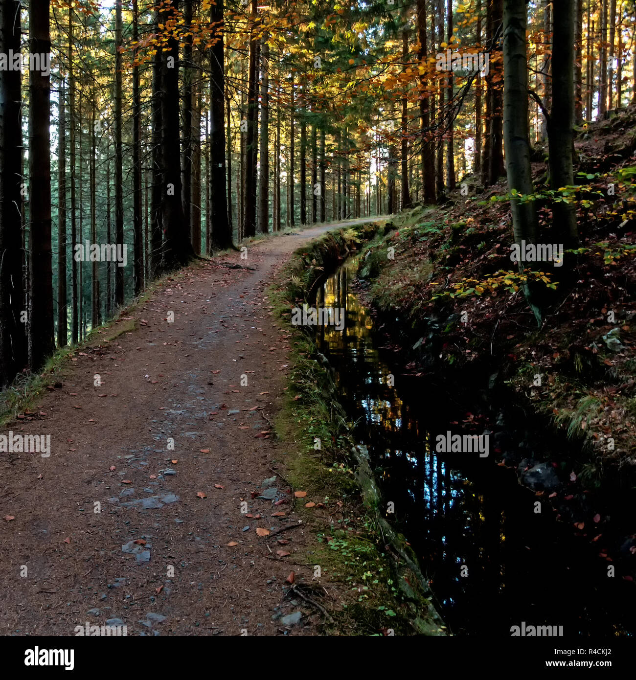 Hiking trail in the forest of the Harz mountains - Stock Image