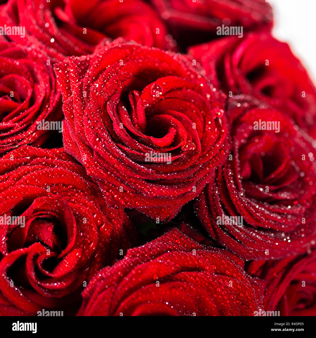 Perfect bouquet of red roses, love and romance concept Stock Photo ...