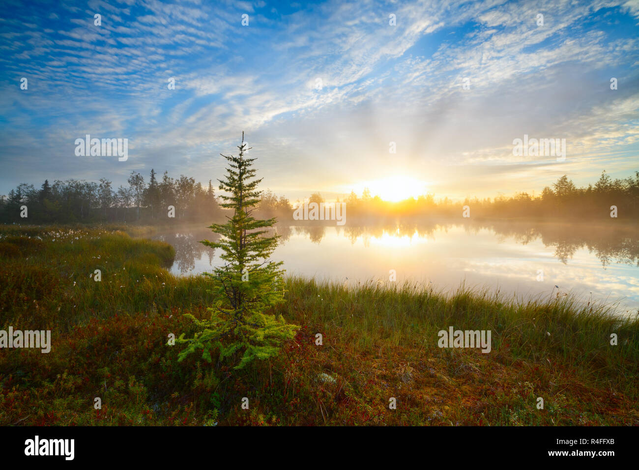 beautiful bright dawn sunrise sunset tundra forest wild lake spruce foreground red sun beam ray through fog reflection white clouds - Stock Image