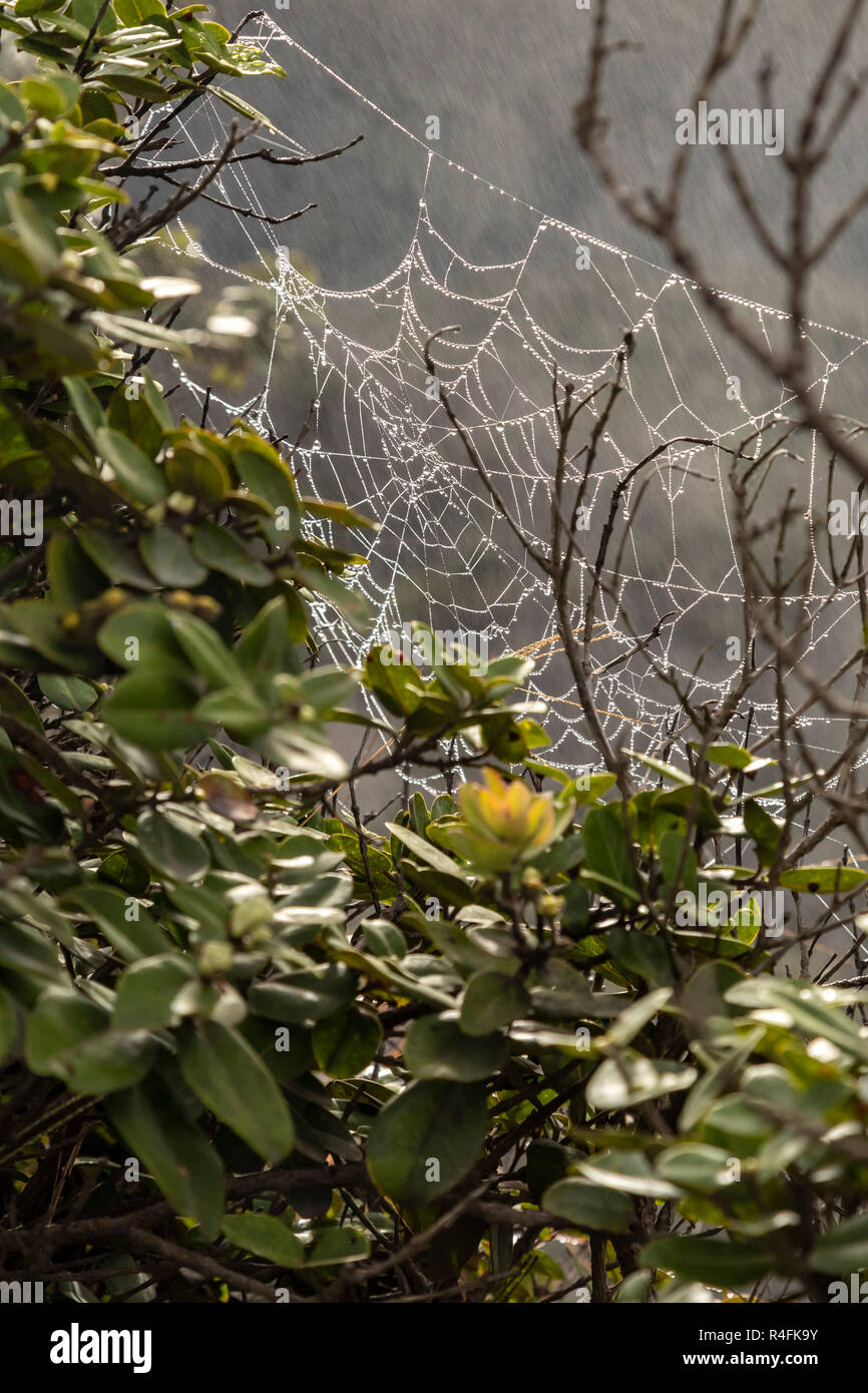Hawaii Volcanoes National Park, Hawaii - A spider's web covered with moisture from steam vents at the Kilauea volcano. - Stock Image