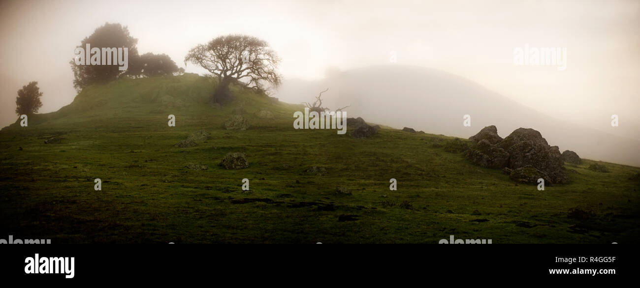 Mist covering a grassy hill. - Stock Image