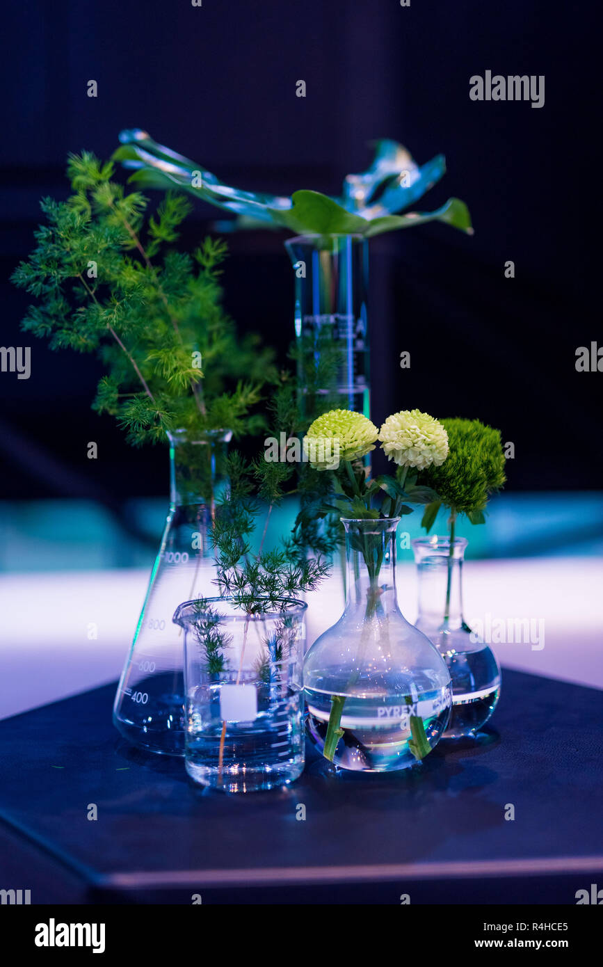 DIY flowers & green plants in glass beakers for interior decoration Stock Photo