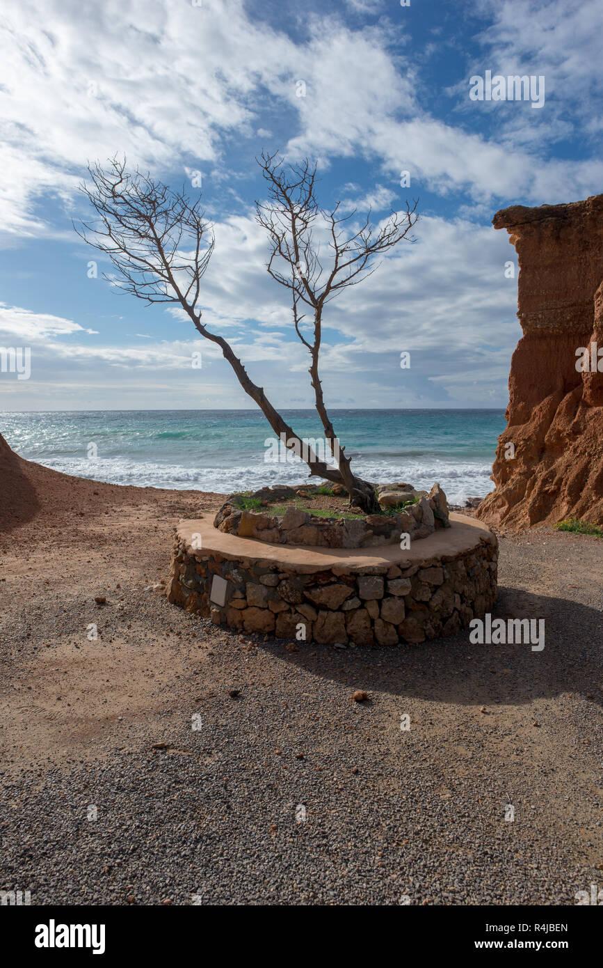 Solitary tree in the cala sa caleta, Ibiza, Spain - Stock Image