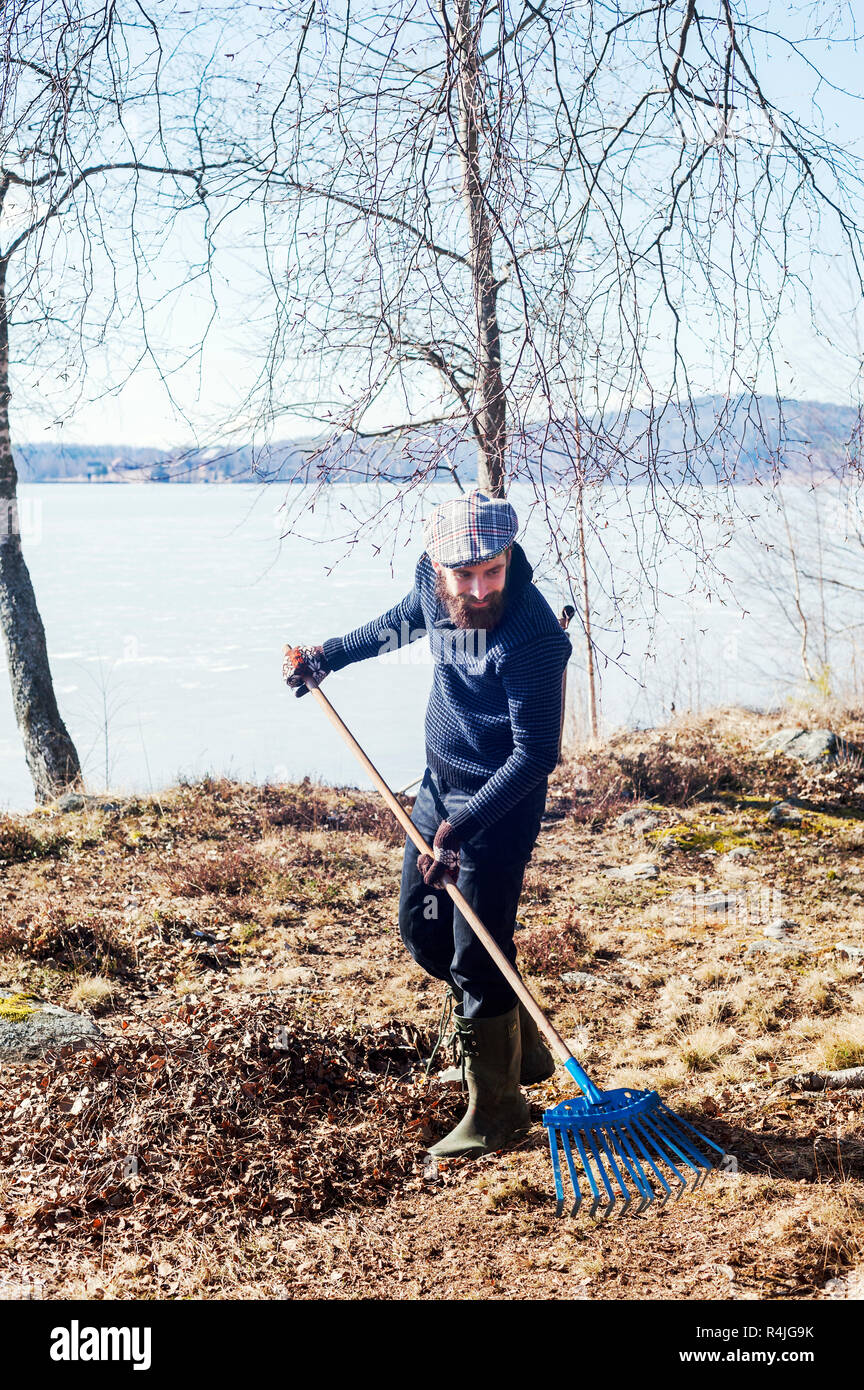 Man raking leaves in Dalarna, Sweden - Stock Image