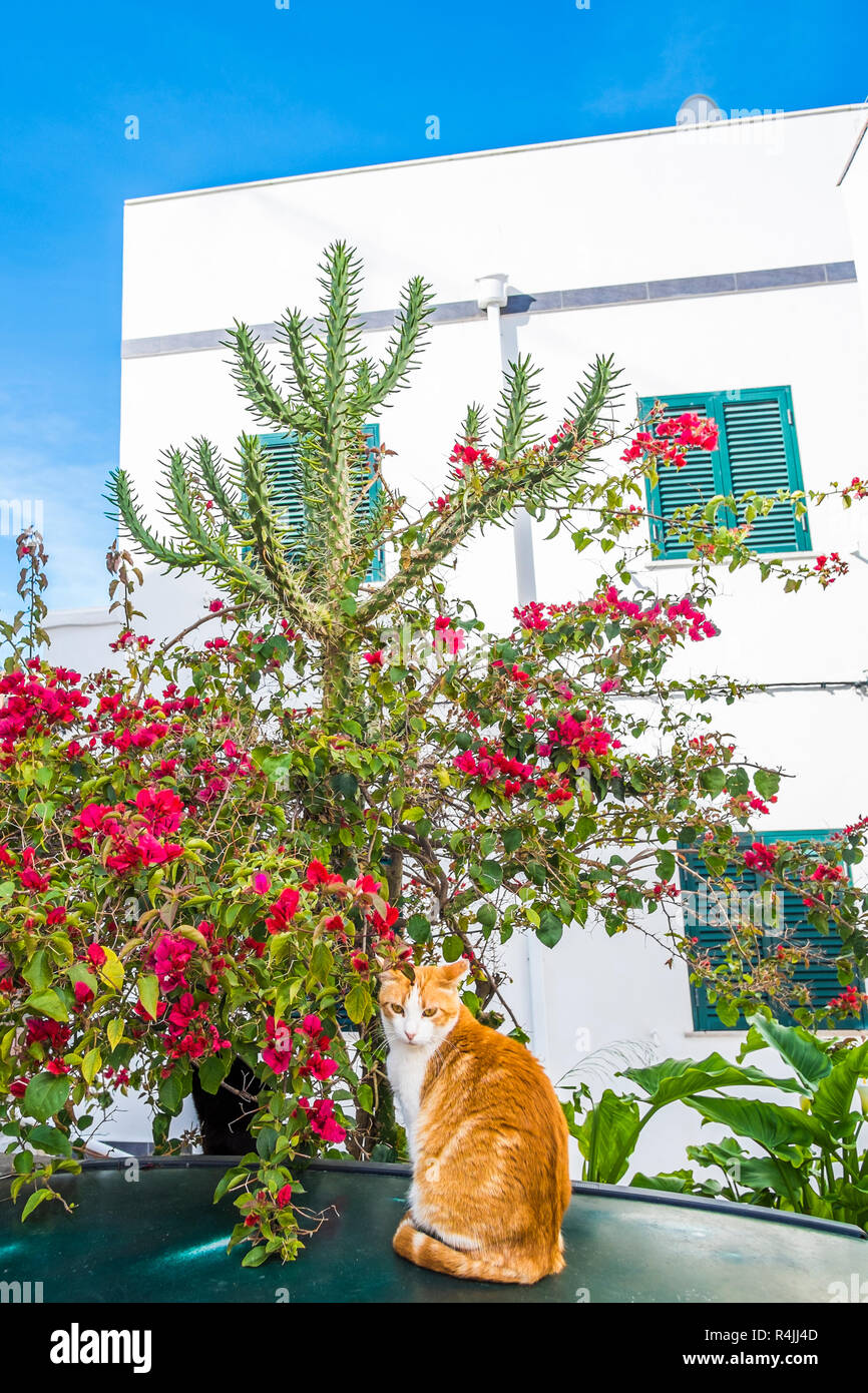 cat on the roof of a car with cactus and red brush in background - Stock Image