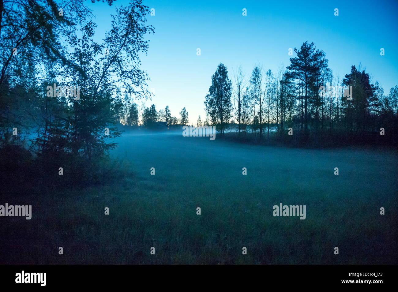 Mist field at dawn in Dalarna, Sweden - Stock Image