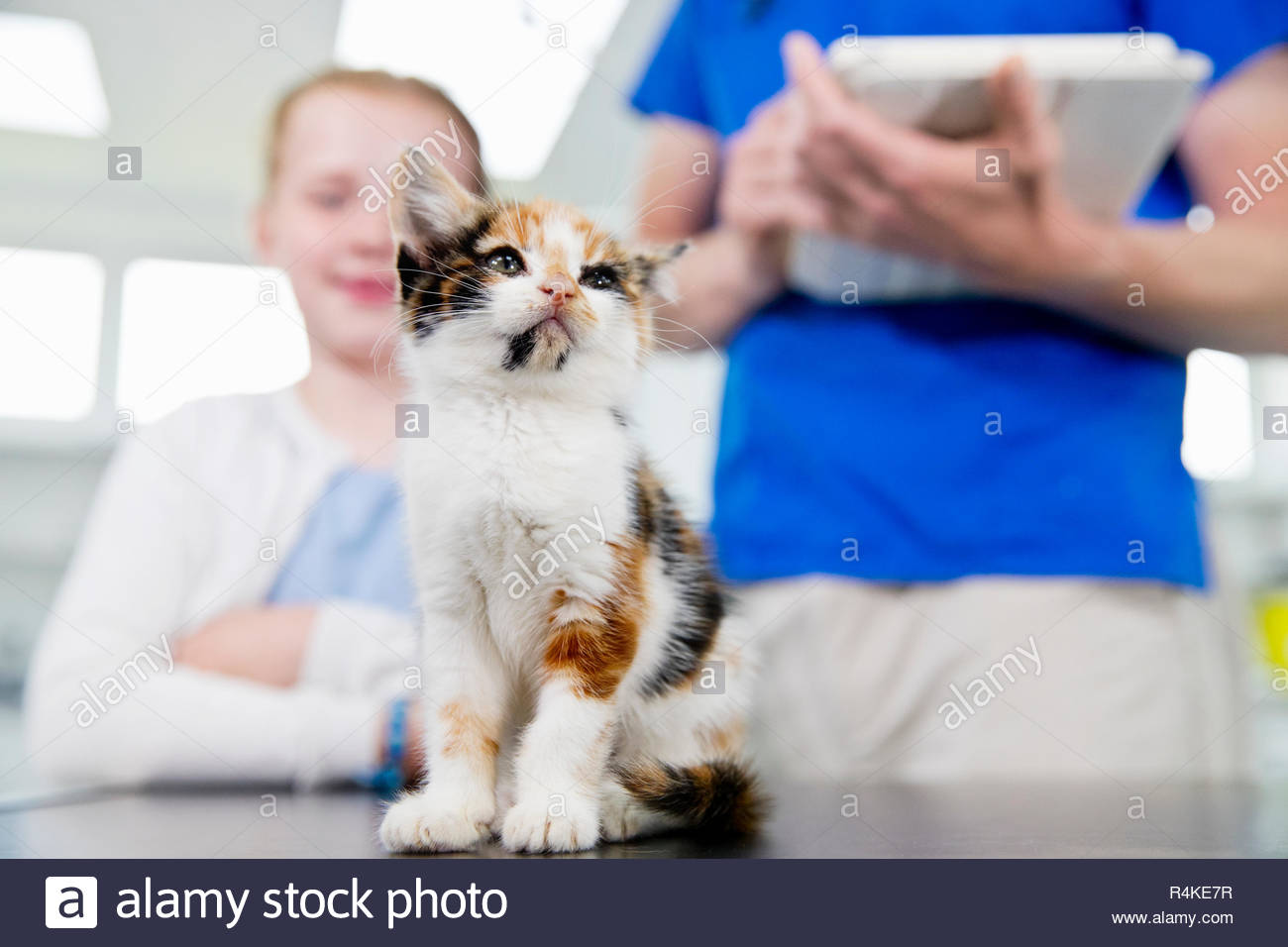 Vet with pet kitten cat on table in surgery with child owner - Stock Image