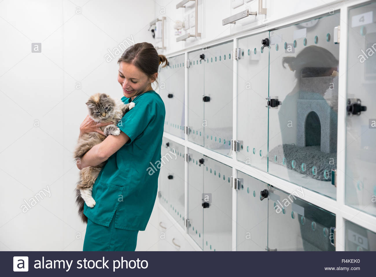 Nurse holding pet cat in recovery room of vet surgery - Stock Image