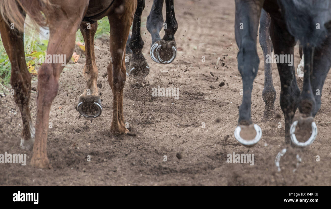 Horses Hooves - Stock Image
