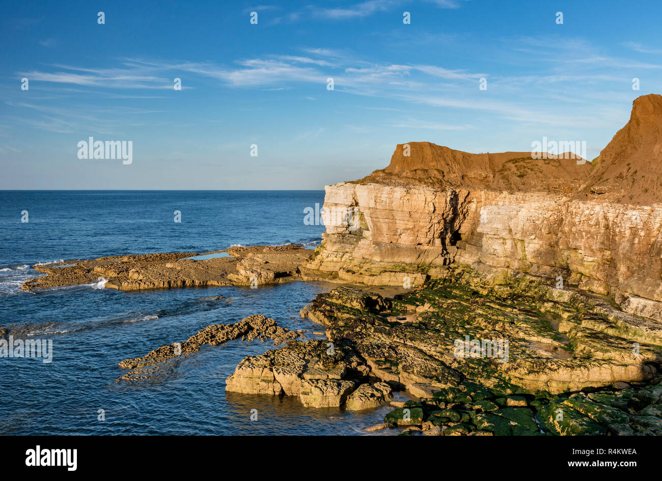 Chalk Cliffs at Thornwick Bay Flamborough Head East Riding of Yorkshire England Stock Photo