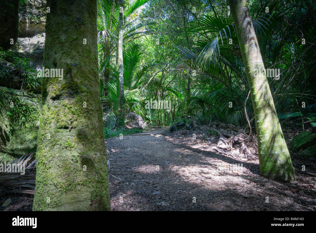 The Grove native bush walk near Pohara South Island - Stock Image