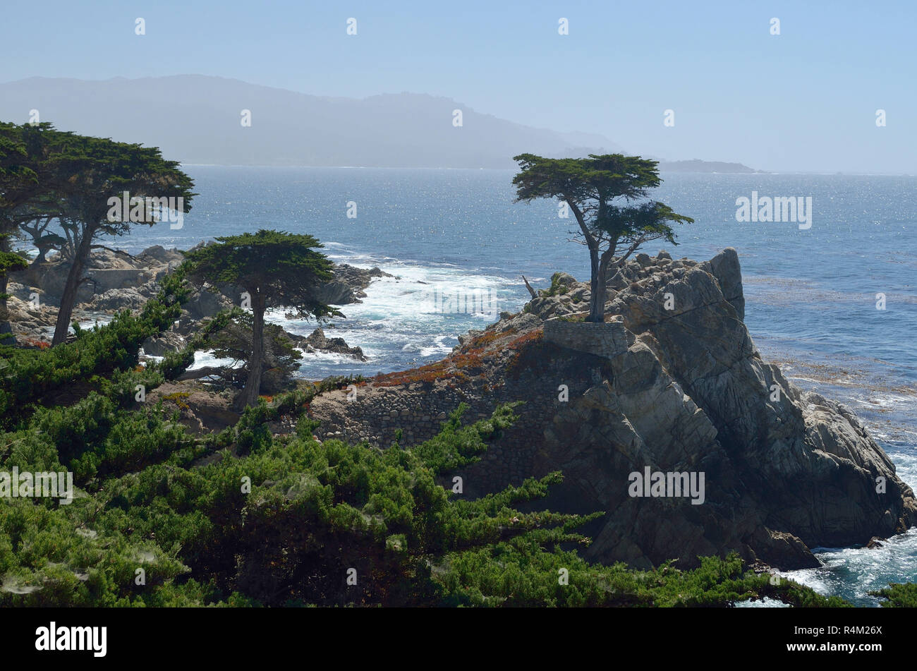 Lone Monterey cypress tree, Pebble Beach, California, USA Stock Photo