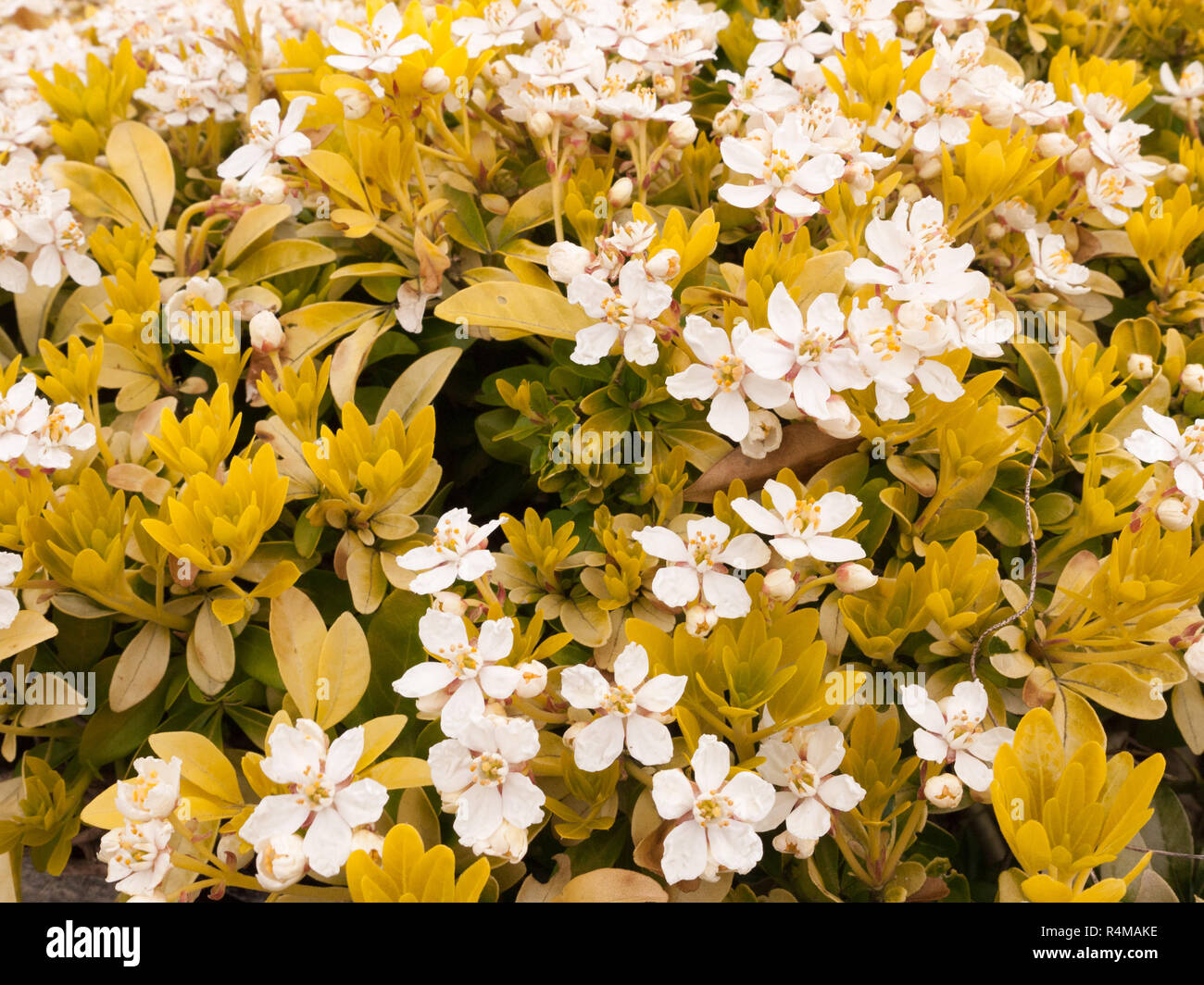 A Bunch Of White Flowers Mixed With Yellow Flowers To Create A