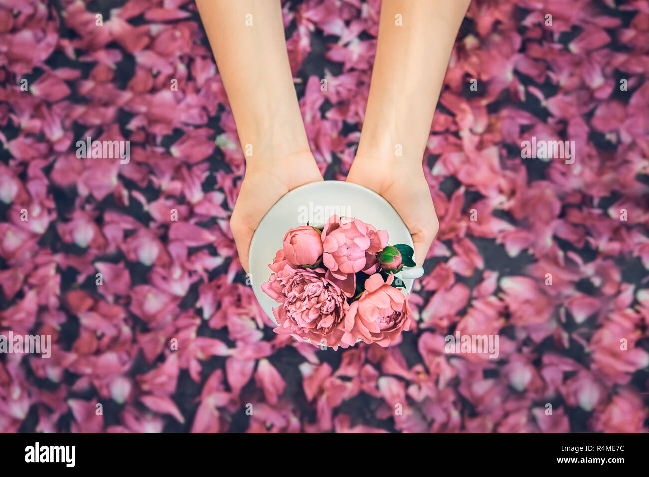 68ae516d56ee Female hands holding beautiful light pink pionies bouquet in cup above dark  background with petals. Flat lay. Muted colors. Love gift greeting complim
