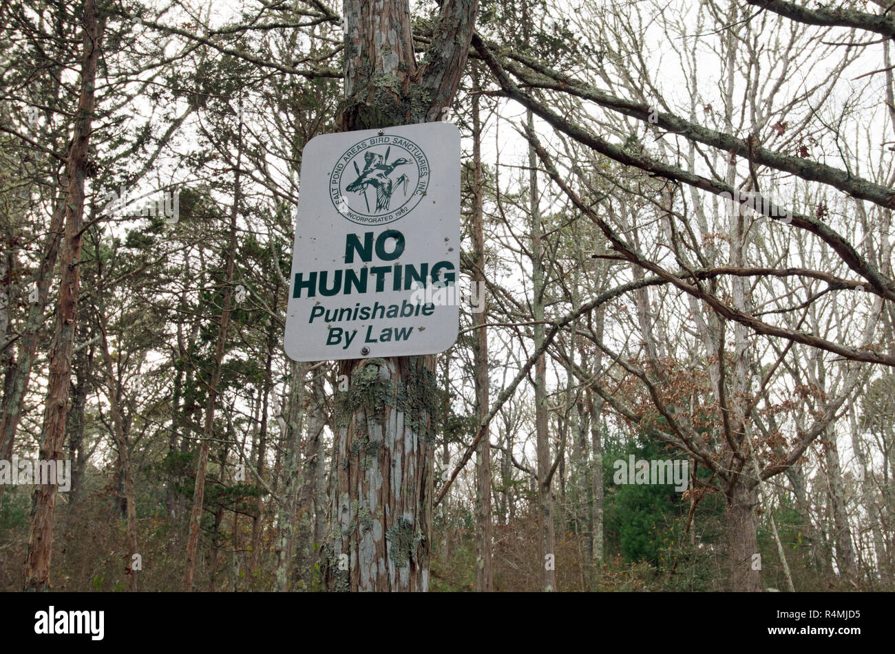 No Hunting Punishable By Law sign on tree at Salt Pond Areas Bird Sanctuaries  in Falmouth, Cape Cod, Massachusetts USA - Stock Image