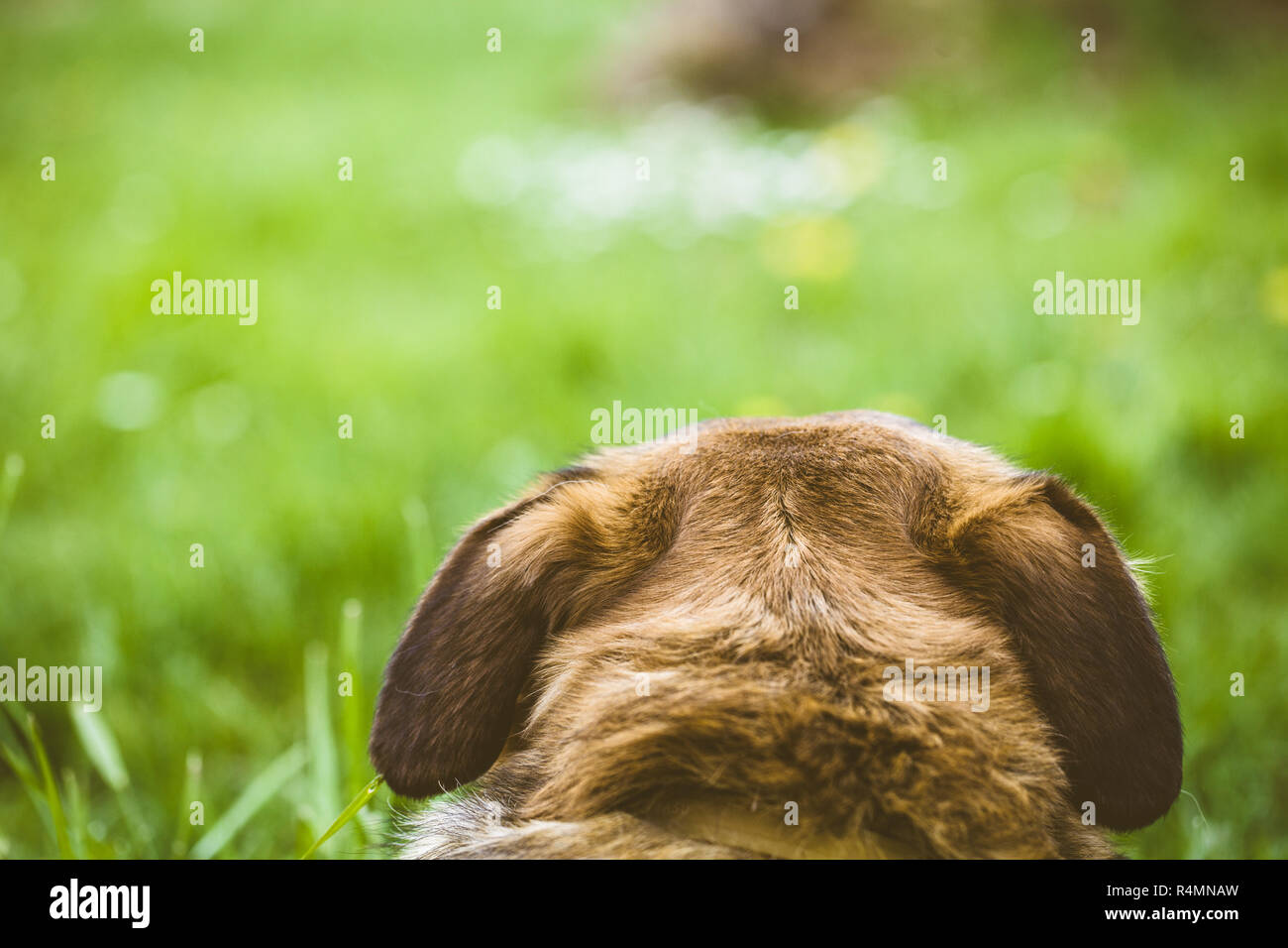 Dog in grass - Stock Image