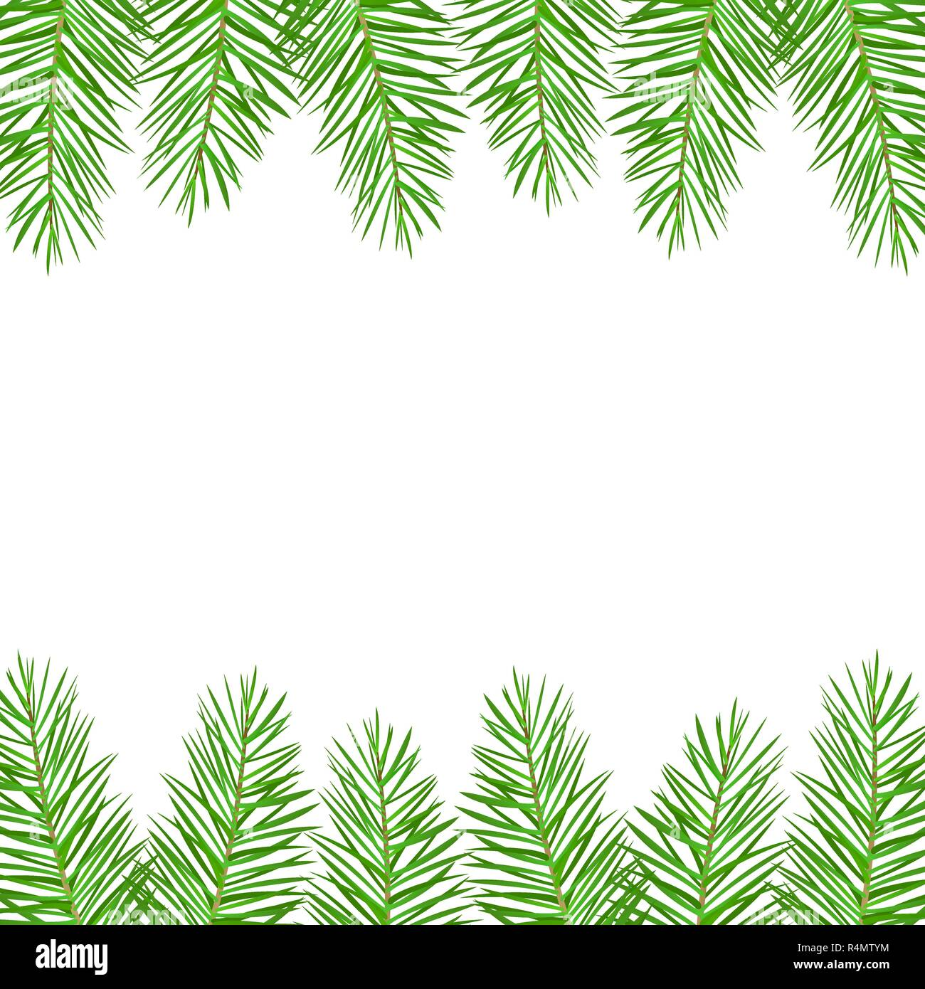 Twigs of green Christmas spruce - Stock Vector