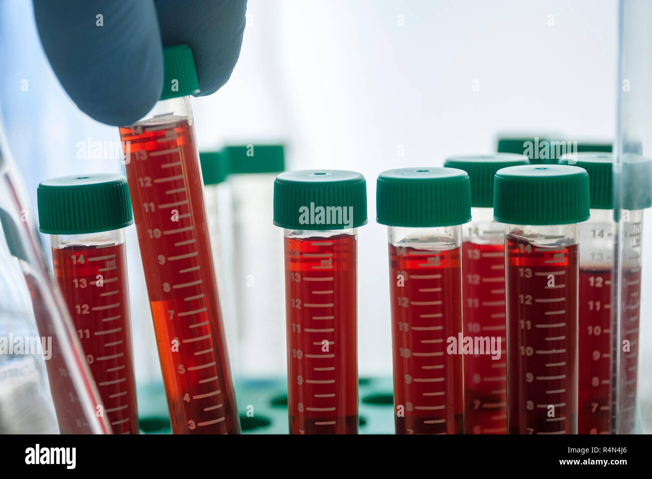 Vials of blood in lab - Stock Image