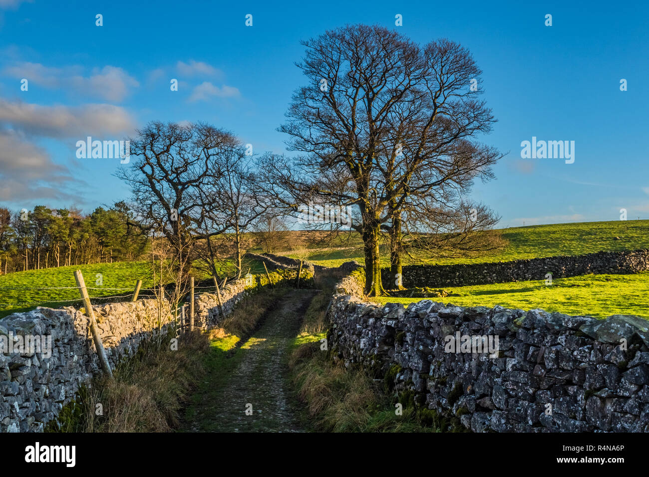 Settle in the Yorkshire Dales with a female hill walker near to the village of Stainforth - Stock Image