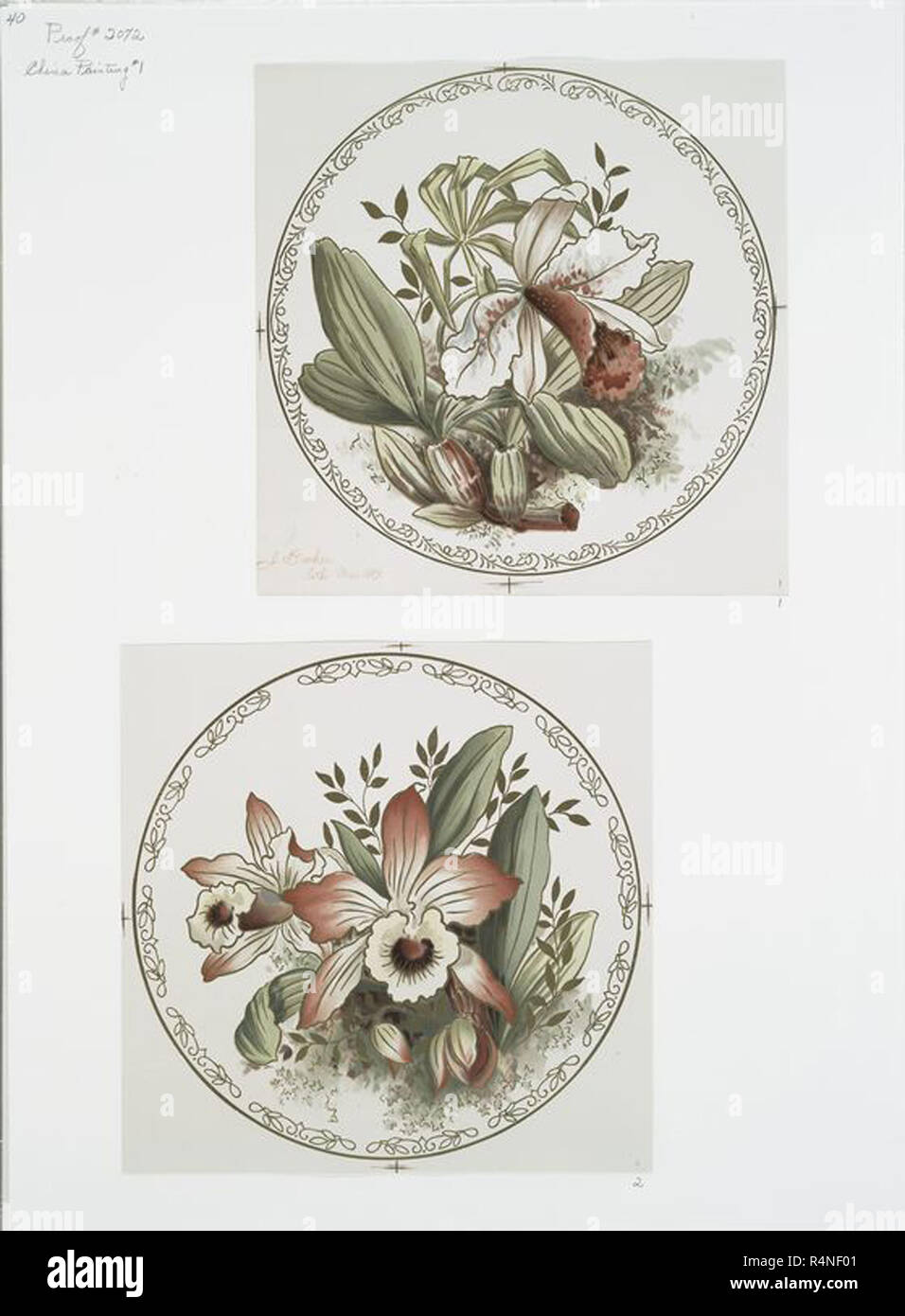 vintage garden element graphic illustration from either vintage art or theatrical design old classic illustrated flowers, trees, bushes plants etc Stock Photo