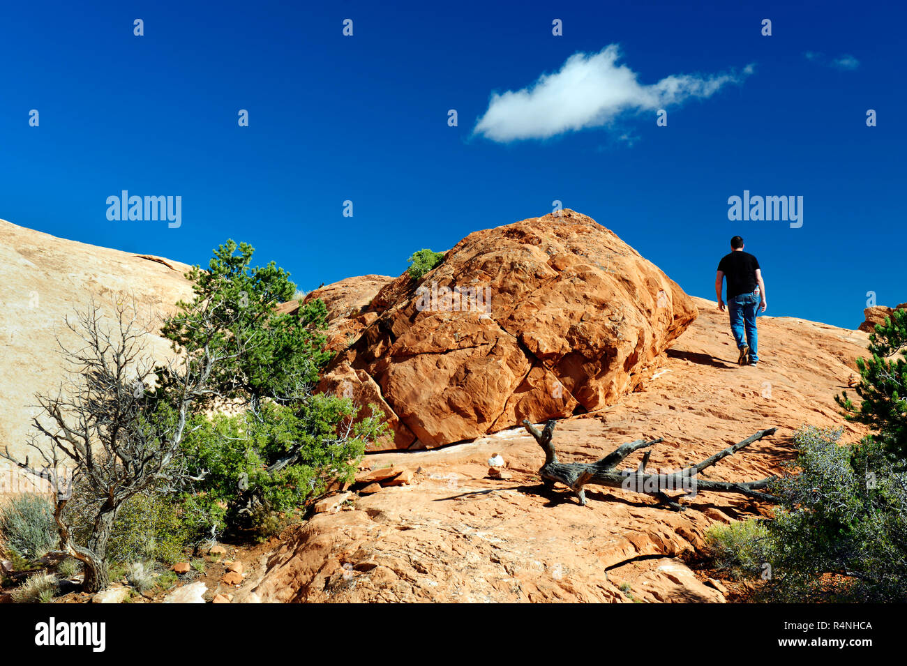 Lone male hiker walking on Upheaval Dome Overlook trail, Canyonland National Park, Utah, USA. - Stock Image