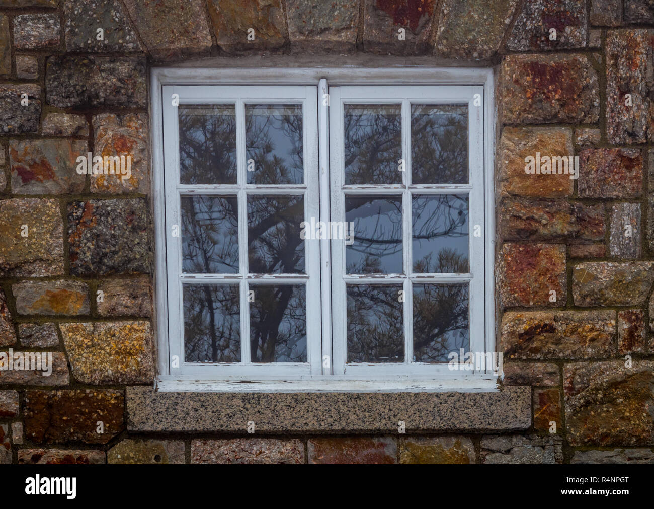 Double-paned window in white reflects bare coniferous pine trees through the panes surrounded with rugged warm-toned brick - Stock Image
