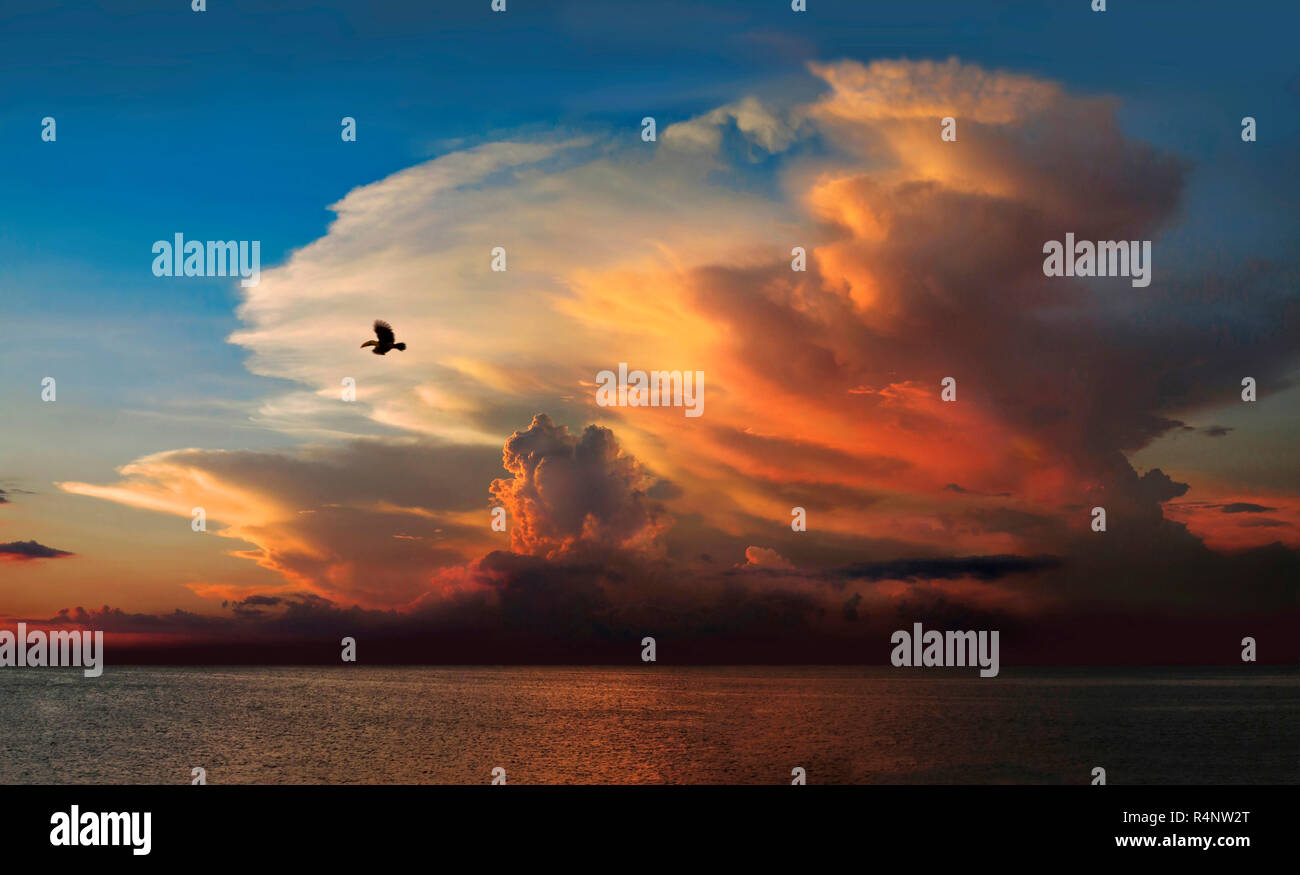 Tranquil scene with silhouette of bird flying against sky at sunset above Amazon River, Brazil - Stock Image