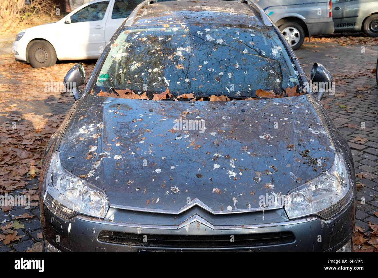 Leipzig, Germany. 28th Nov, 2018. A car covered in bird droppings stands under trees. The driver has parked under plane trees, which are used by crows as sleeping places. Large flocks of these birds from Northern and Eastern Europe spend the winter here and gather every evening to spend the night together. Credit: Sebastian Willnow/dpa-Zentralbild/ZB/dpa/Alamy Live News - Stock Image